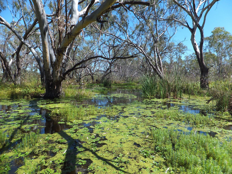 Warren Macquarie Marshes by Bill Phillips